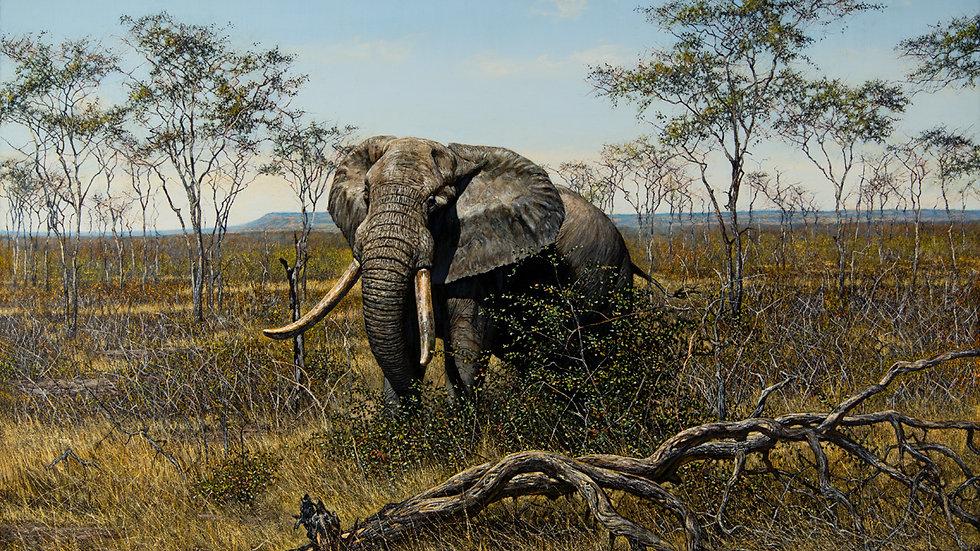 Kabakwe - The legendary bull elephant
