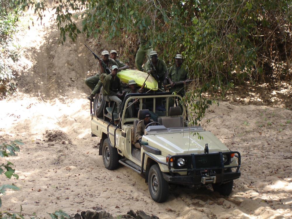 anti poaching game rangers scouts niassa