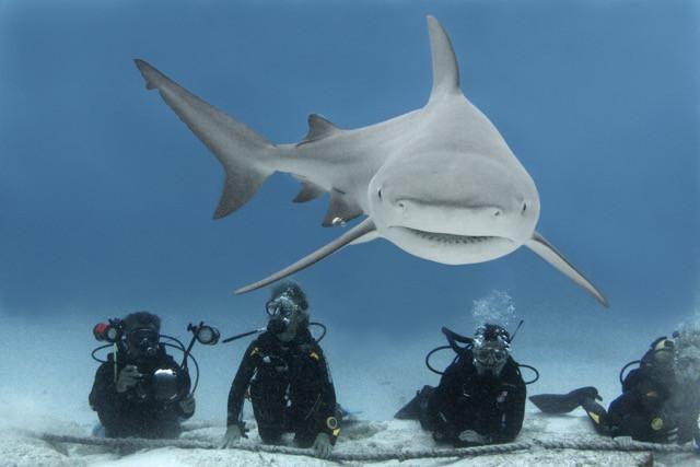 Frente a frente con el Tiburón Toro / Face to Face with the Bull Shark