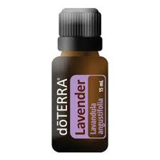 Lavender  Lavandula angustifolia