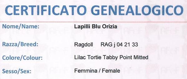 Orizia1_edited.jpg