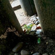 2015_09_01 Inaritaisha Shrine 6+.jpg