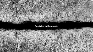 Surviving in the cracks