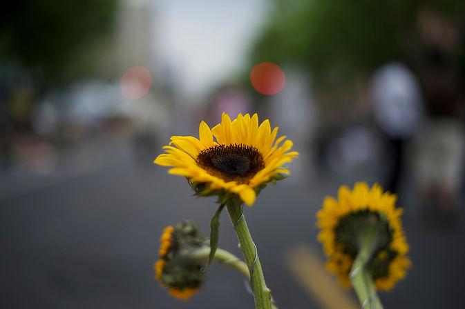 Sunflower Movement 2014.jpg