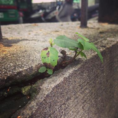 2013_11_16 Mingsheng Community Taipei ci