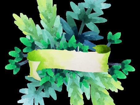 De verde se ve más bonito