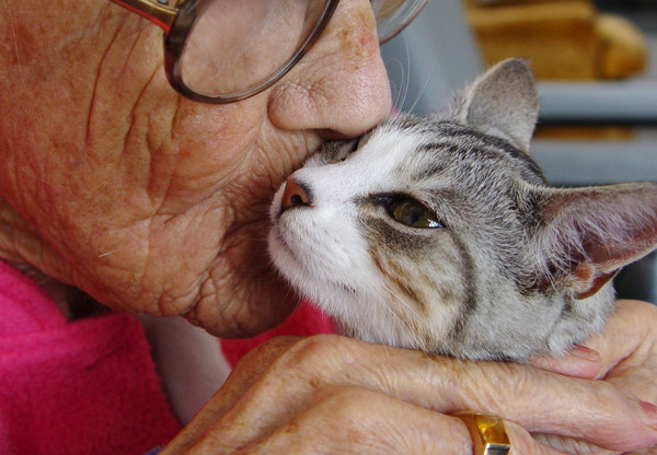 600px-woman-kissing-therapy-cat.jpg