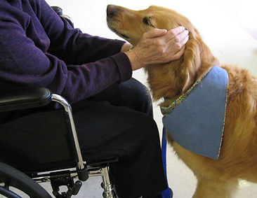 pet_assisted_therapy.jpg