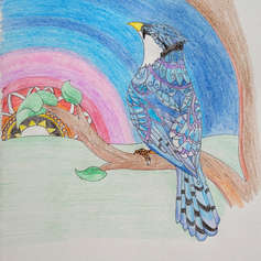 Mandela Blue Jay