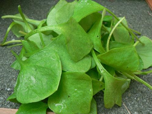 Salade pourpier - la botte