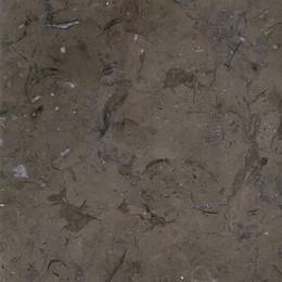 Grey Fossils