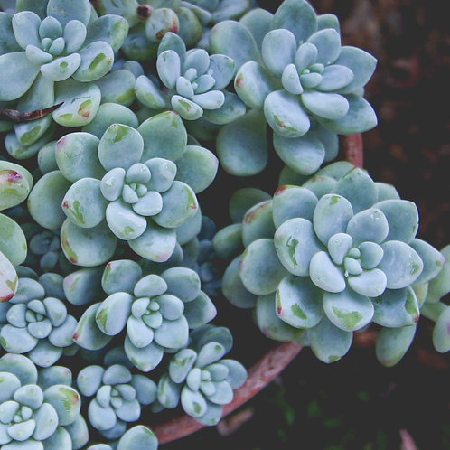 "Plant Photo Prints (5"" x 5"")"