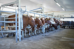 DeLaval Milking Parlour P2100 Exit