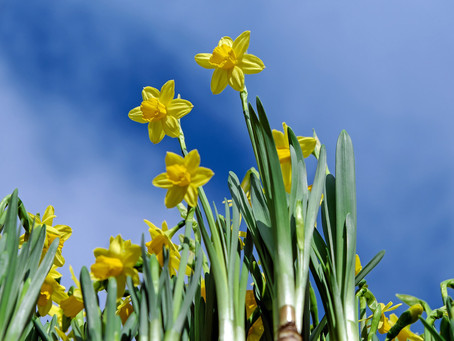 Is your website in need of a spring clean?