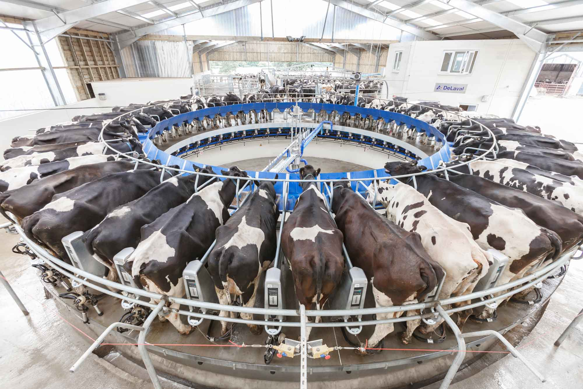 Milking Machine and Dairy Service and Installation / Delaval