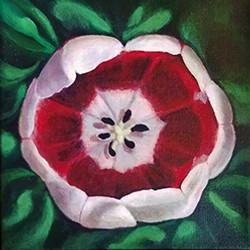 small tulip sm