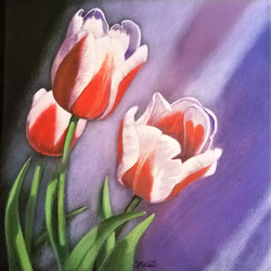 Red and White Tulips 2 Right