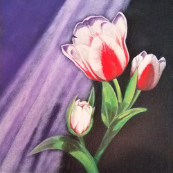 Red and White Tulip 2 of 2 right