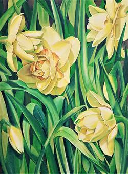 Daffidillons from Boerner Botanical