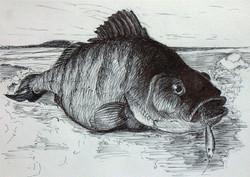 Ice fishing sketch