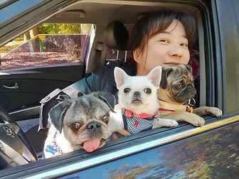 pug mobile_Luce_Freya_Blanca.jpg