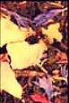 PARADIS FLORAL BIO_edited.png
