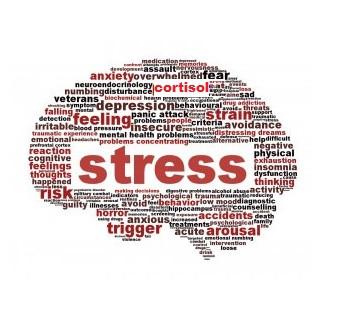 A influência do Cortisol na resposta do estresse.
