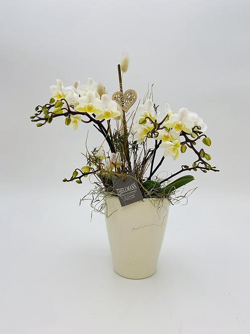 Orchidee Wild