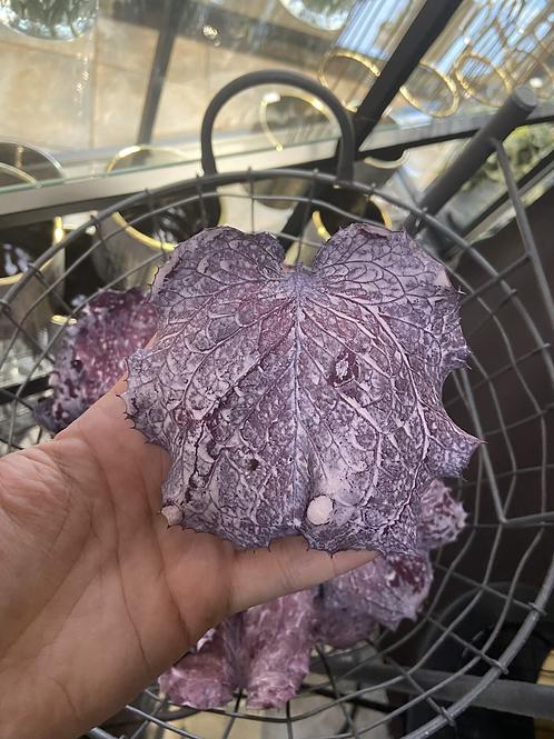 Victoria Blatt violett