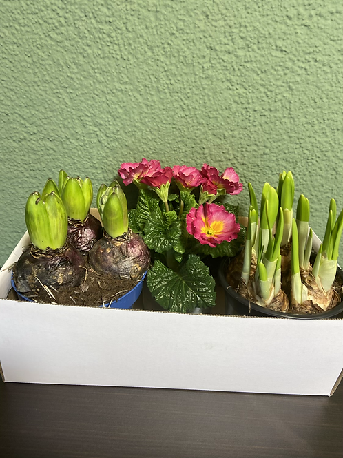 Bunter Frühling's Spaß Box