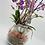 Thumbnail: Orchideen Traum