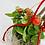 Thumbnail: Tomaten Garten