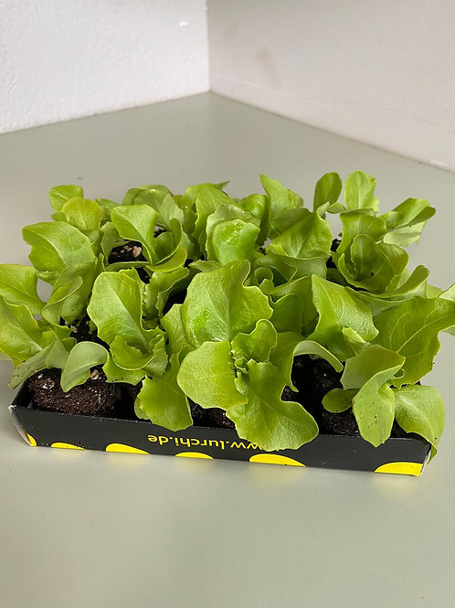 Salat Box - 20 St.
