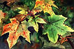 Autumn Leaves Paul Dene Marlor Watercolour Artist