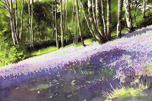 'Bluebell Woods 3' by Paul Dene Marlor