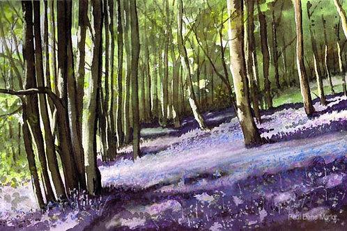'Bluebell Woods 1' by Paul Dene Marlor