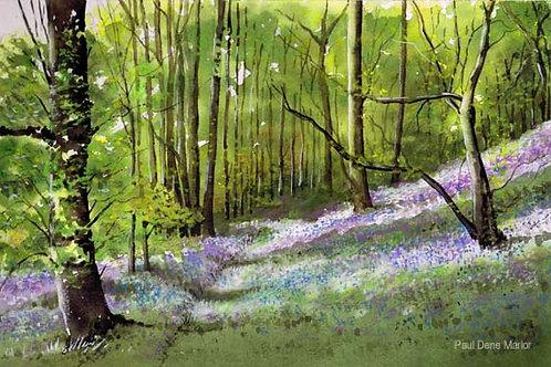 'Bluebell Woods 4' by Paul Dene Marlor
