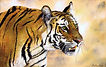 Bengal Tiger Paul Dene Marlor Watercolour Artist