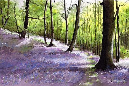 'Bluebell Woods 2' by Paul Dene Marlor