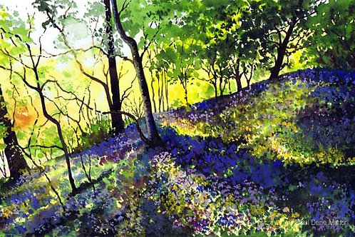'Bluebells Stainland' by Paul Dene Marlor