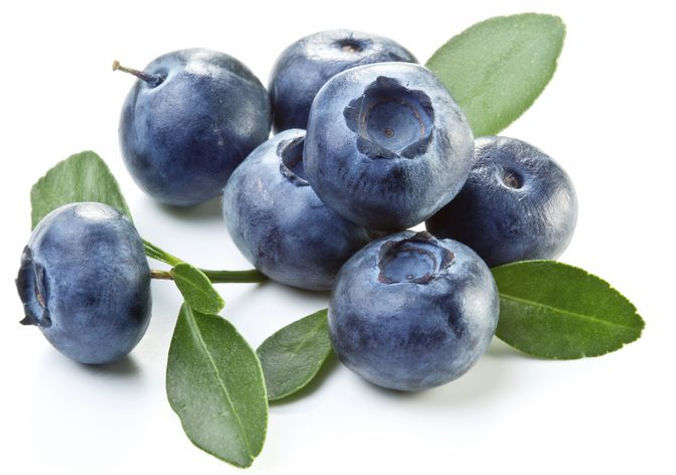 Blueberry pic 2.jpg
