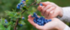 Blueberriy bush pic.jpg