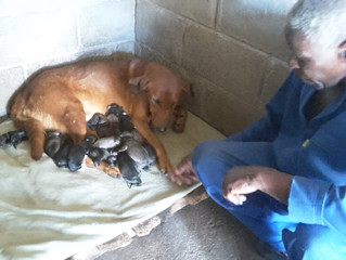 THE STORY OF THE RED DOG MUM
