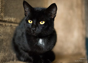 Black cat waiting for a home