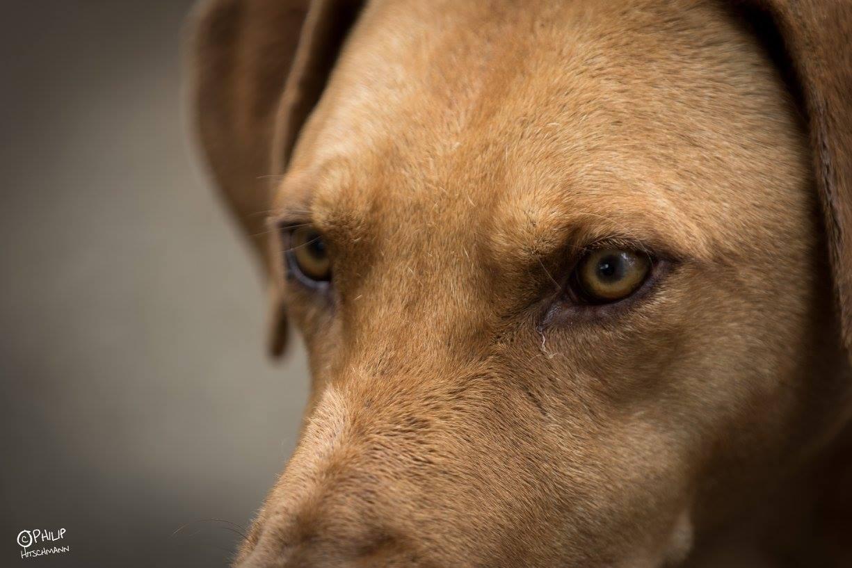 dog new 1