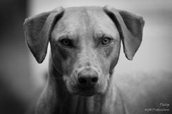 dog new 3