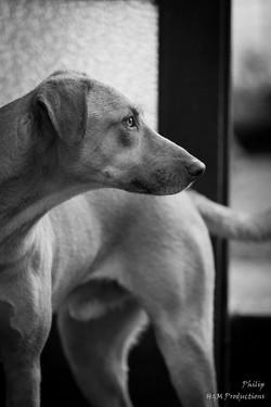 dog new 4