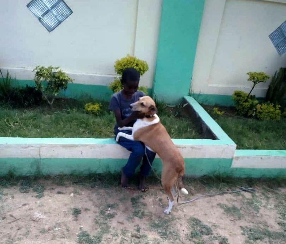 Recently surrendered dog reunited with her human family