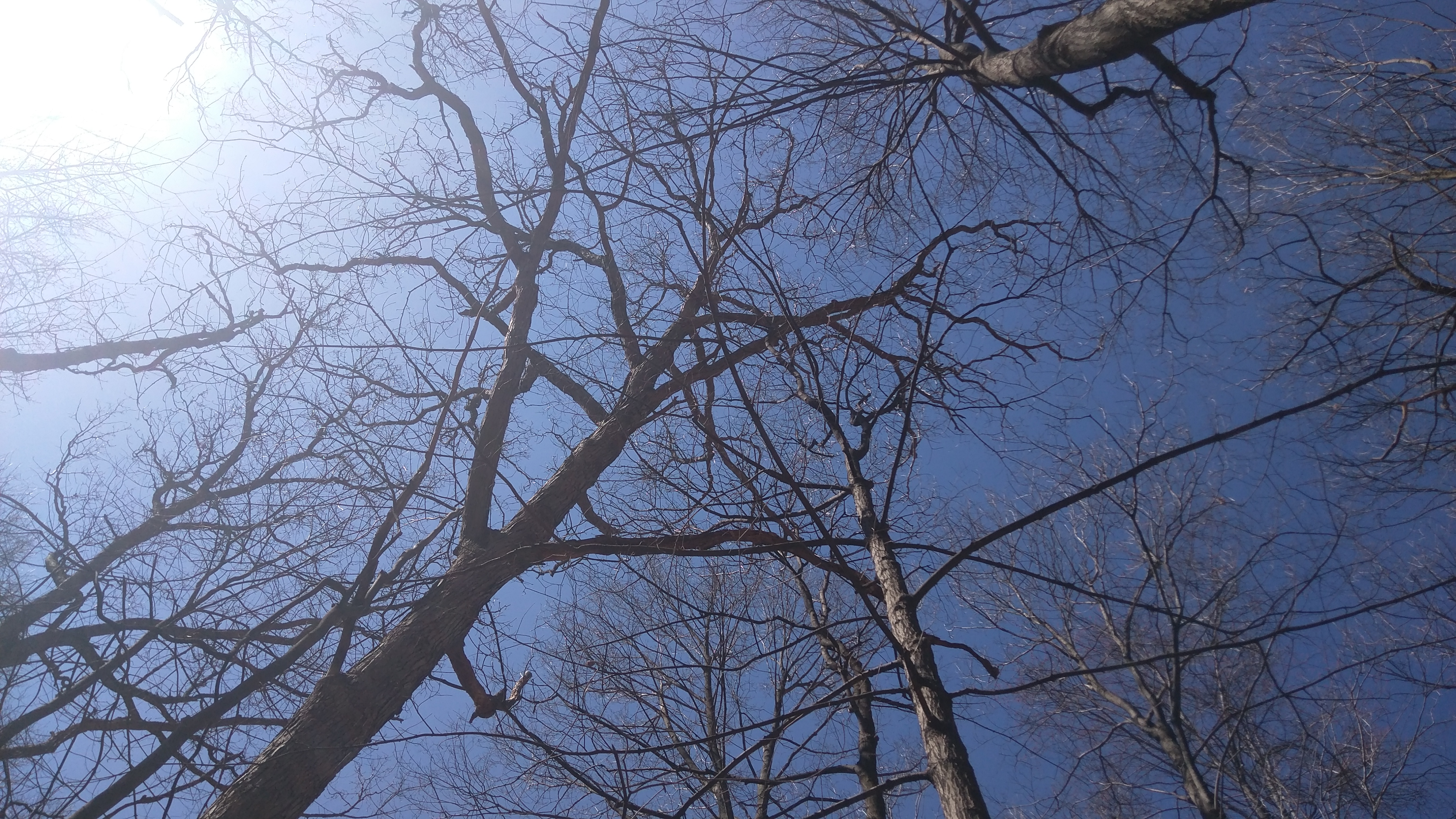 Early spring canopy conditions