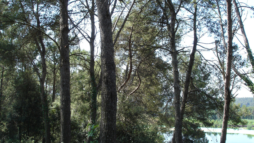 SANTA & COLE LANDSCAPE